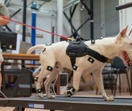 Biomechanical analysis of the canine kinematics of different harnesses