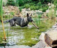 Kutyabarát kert, kertbarát kutya