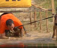 Julius-K9® presents Hard Dog Race 2018