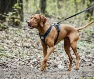 Health, safety and comfort – your dog longs for LONGWALK too